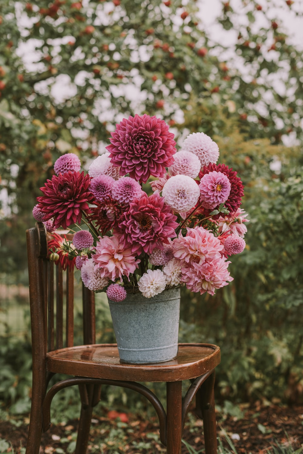 pink and red Carnation flower on gray steal pot