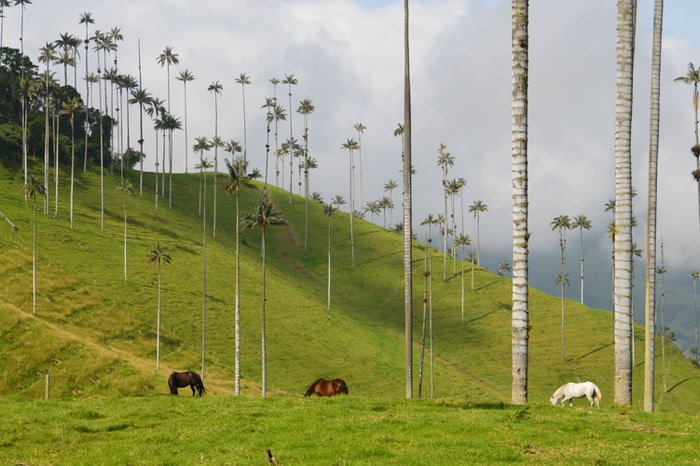 COLOMBIA QUINDIO