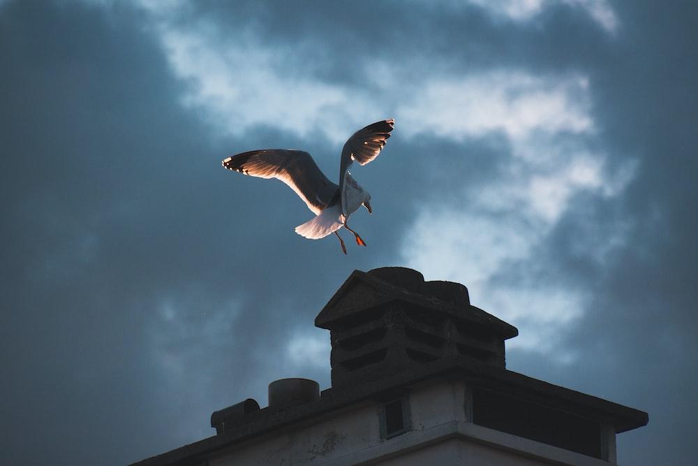 white bird above building