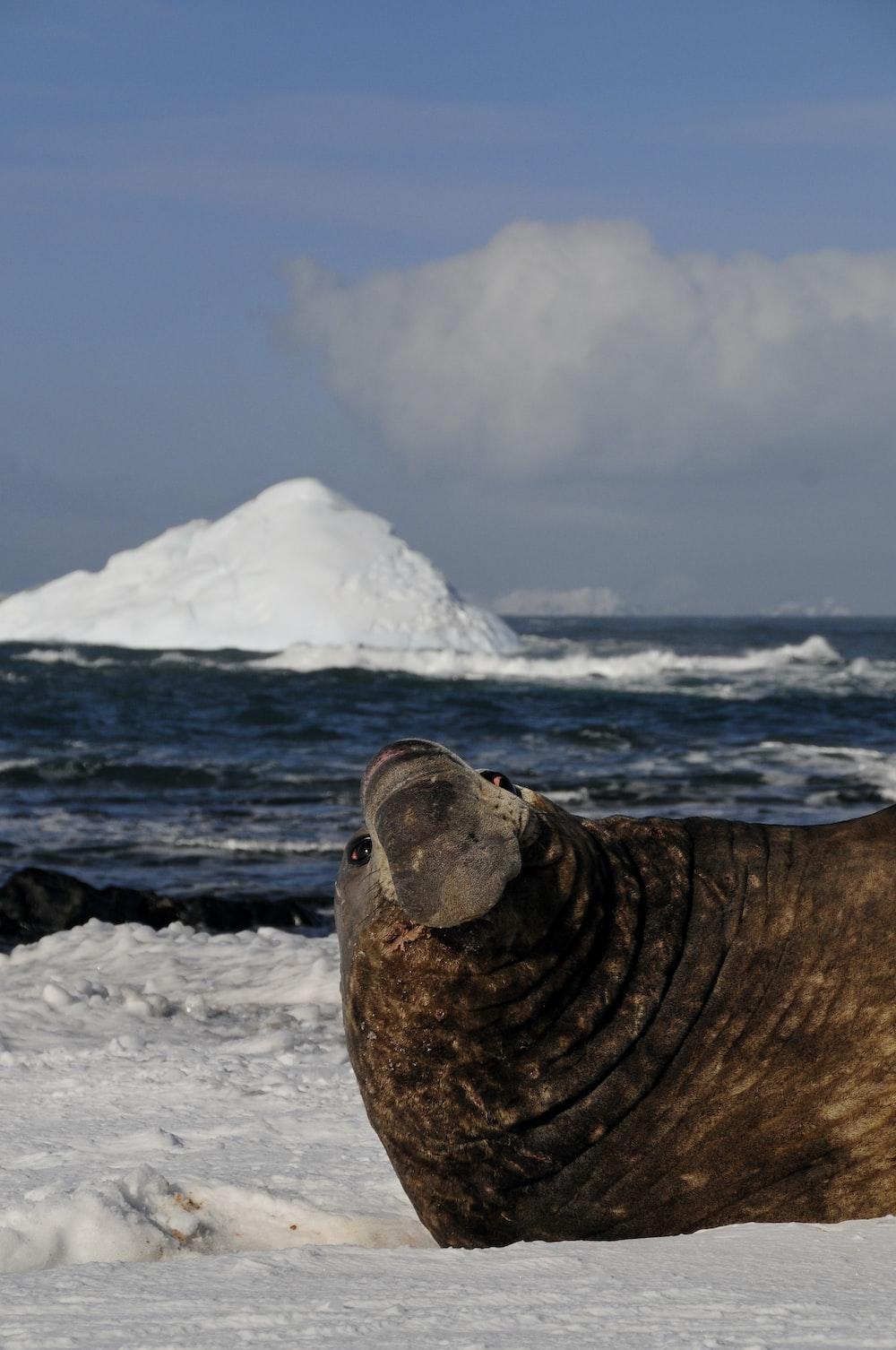 brown seal beside sea