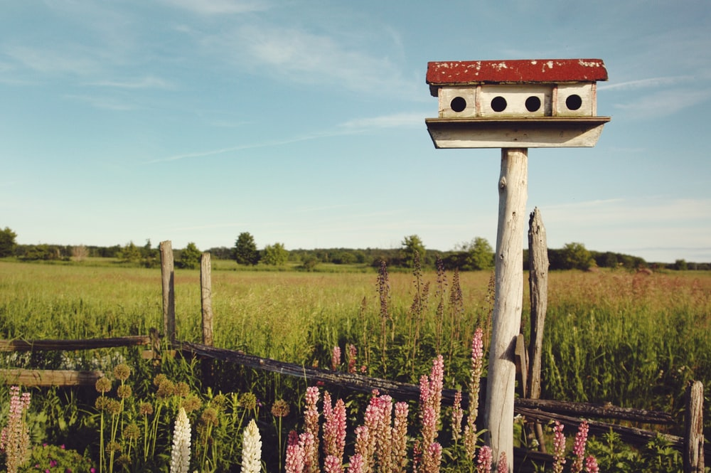 white and red birdhouse across grass land
