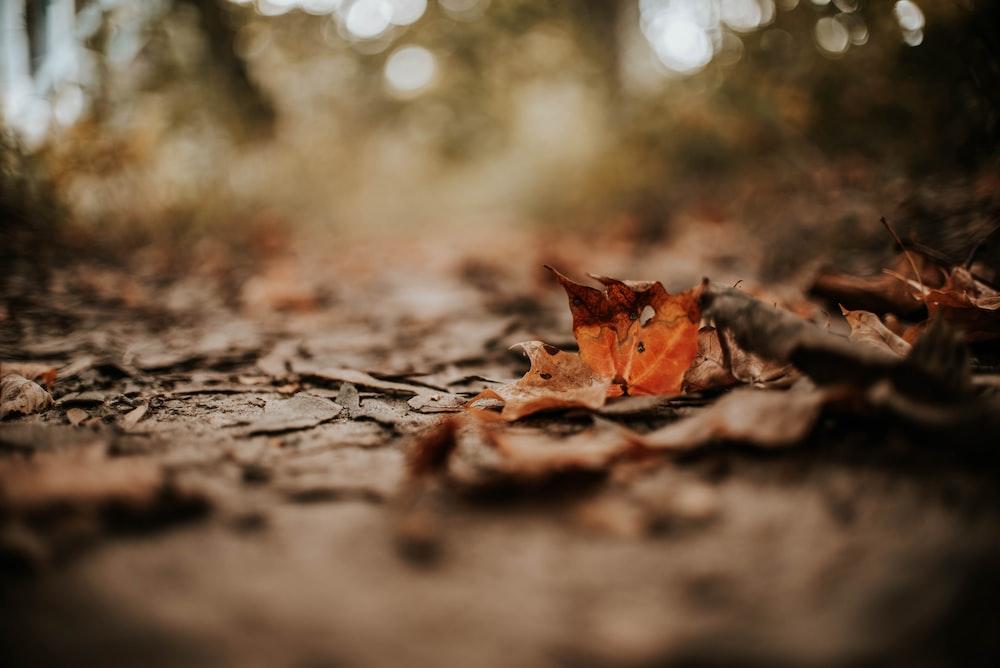 leaves on ground