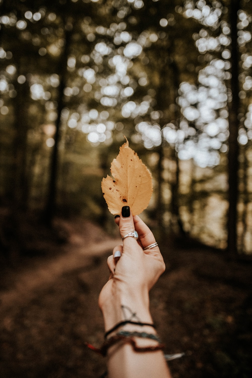 person holds brown leaf