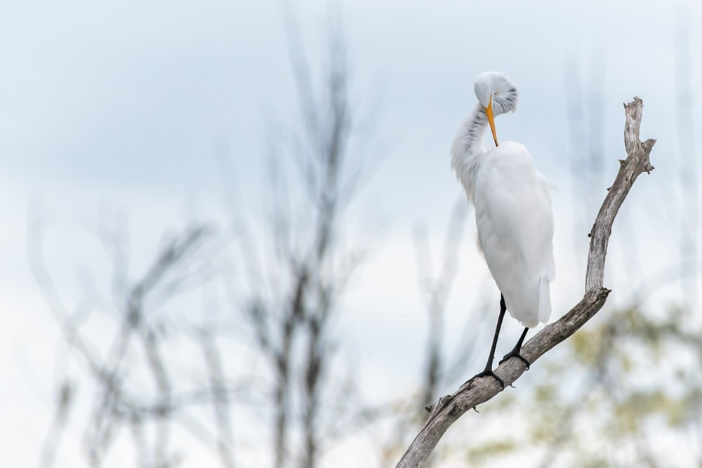 white crane on tree branch