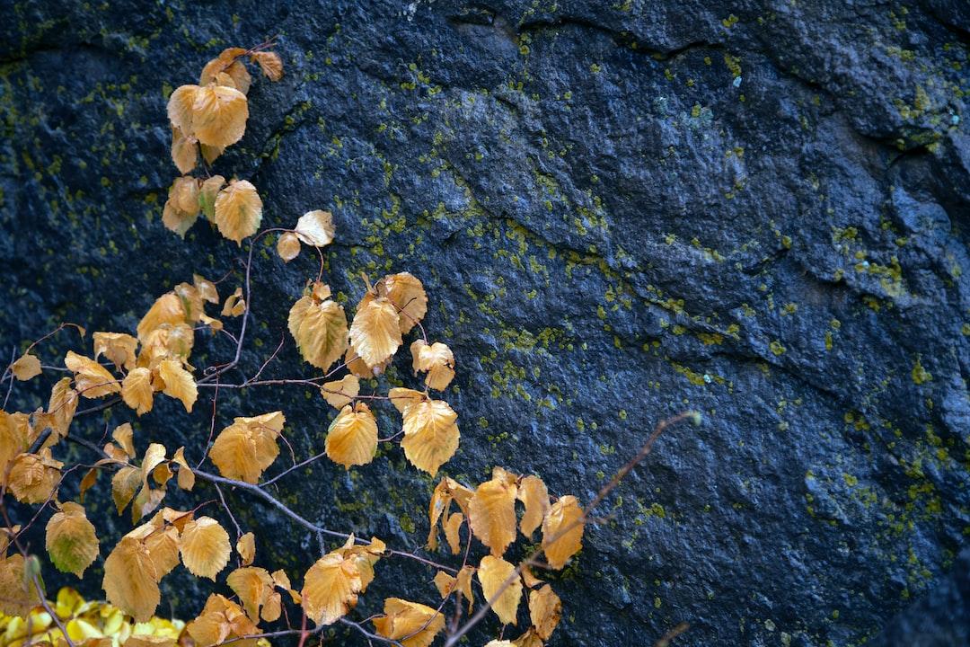 Autumn in Qom province - Iran Nature (Fall In ghom)