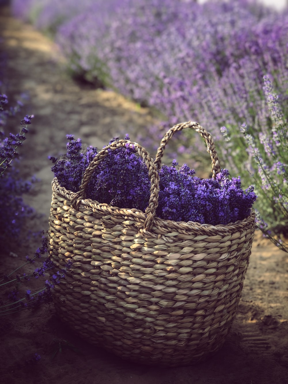 basket of purple lavender flowers on the ground