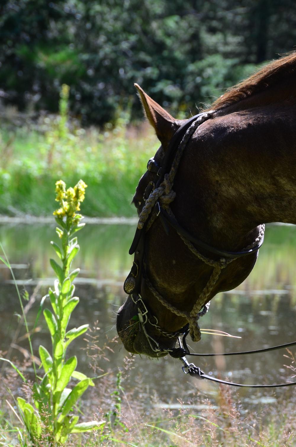 brown horse head macro photography