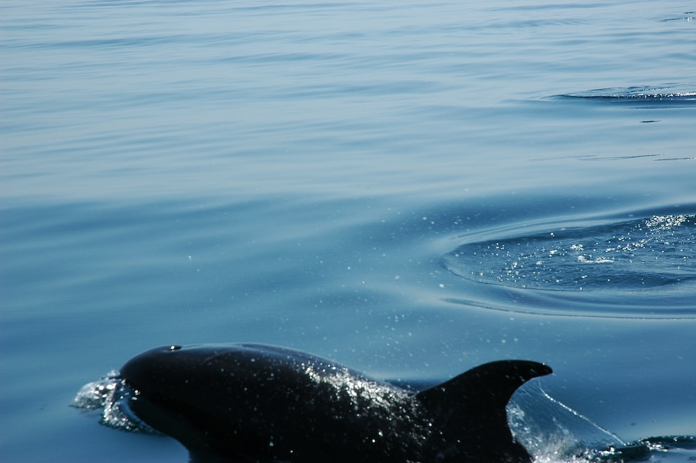 close-up of dolphin