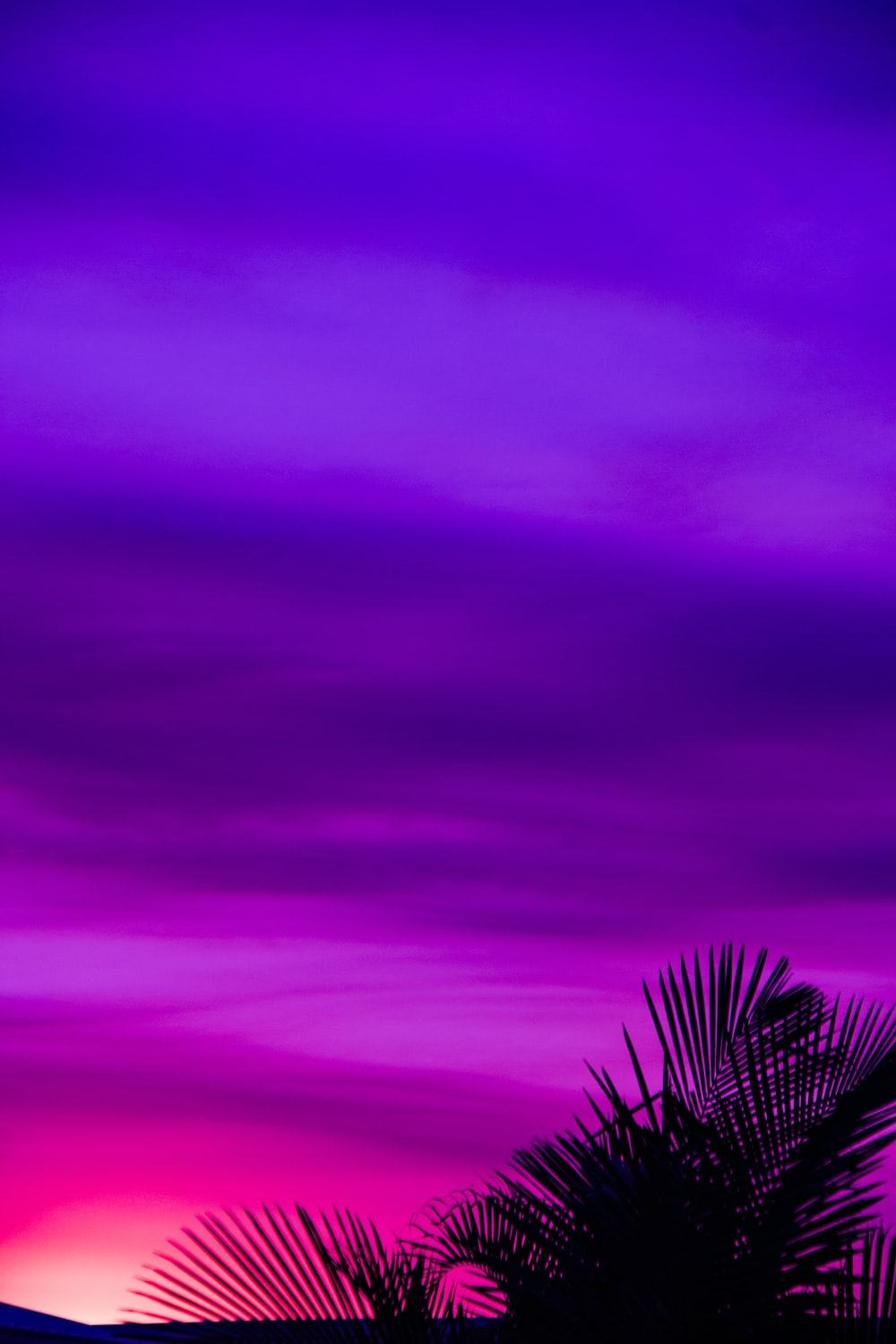 Purple Wallpaper Pictures   Download Free Images on Unsplash