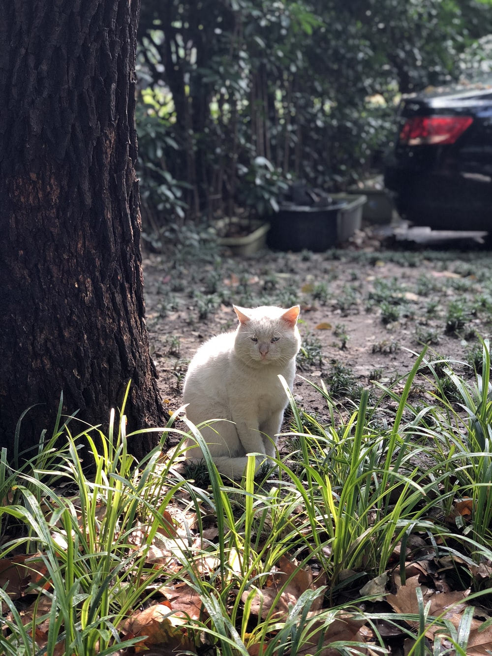 white cat sitting beside tree near parked car