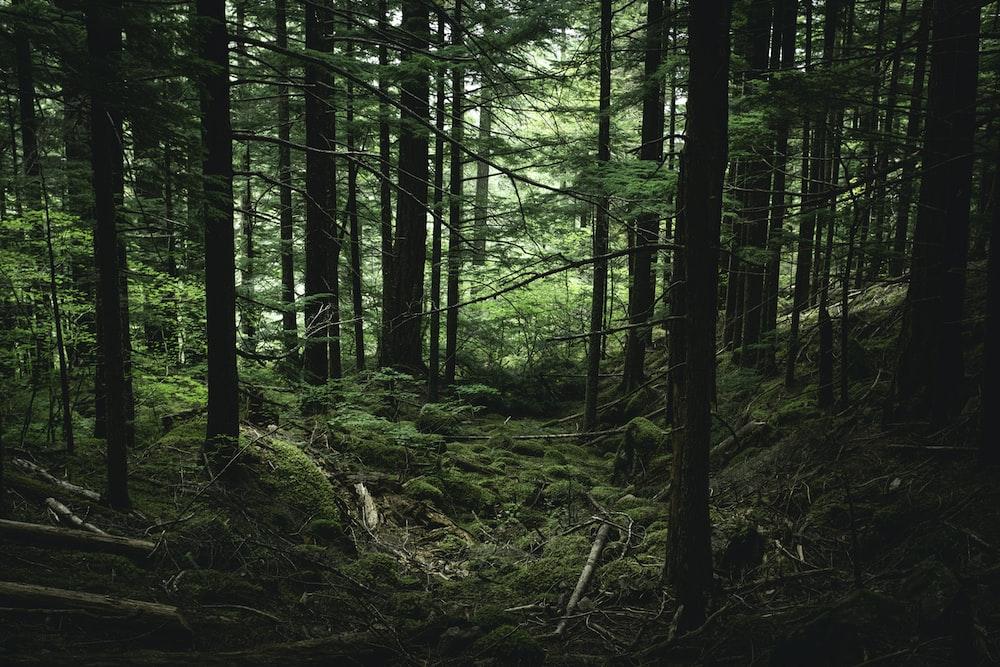 green trees