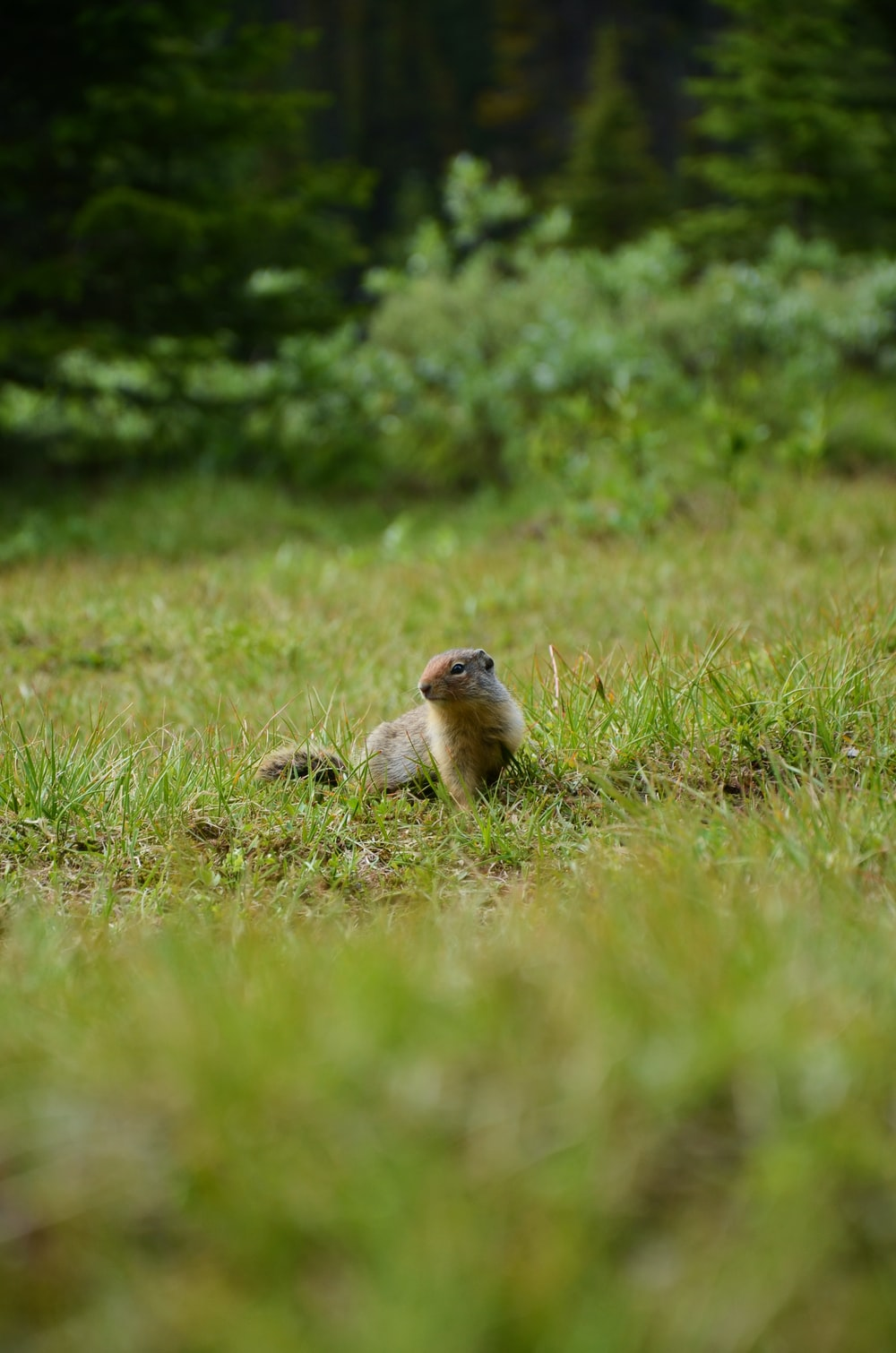 brown rodent on grass