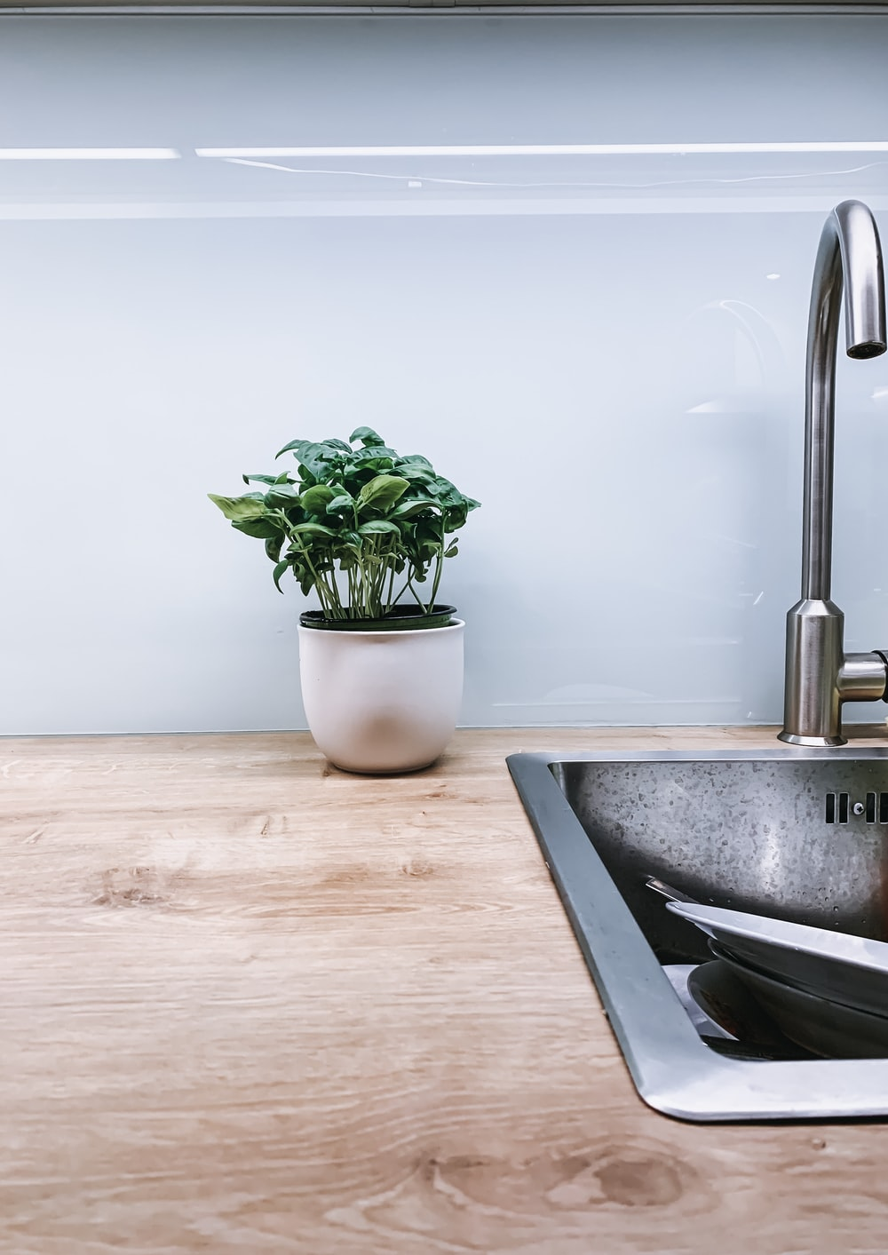 green-leafed plant beside faucet