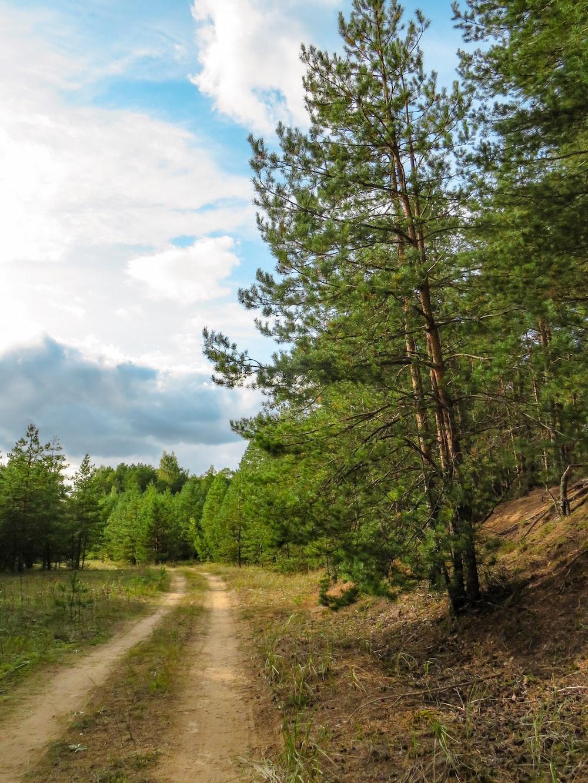 walkway between green trees
