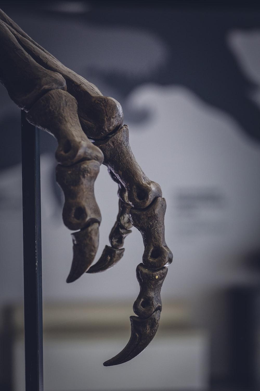 animal bone on black metal stand