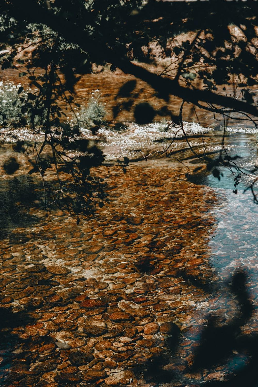 rocks in body of water under tree
