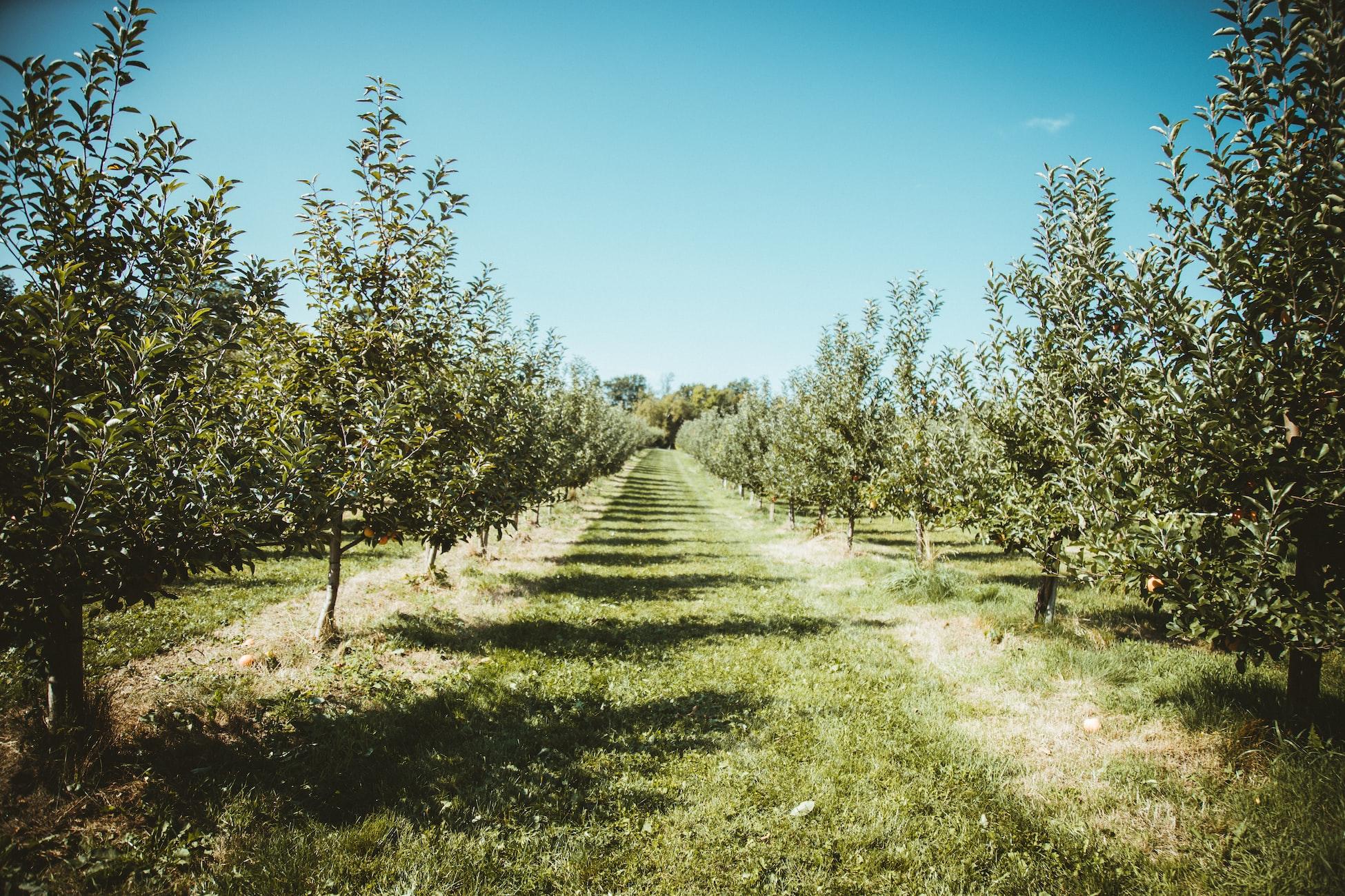 Συκιές, μηλιές, αχλαδιές, κερασιές, καρυδιές στην επιδότηση φύτευσης Δένδρων