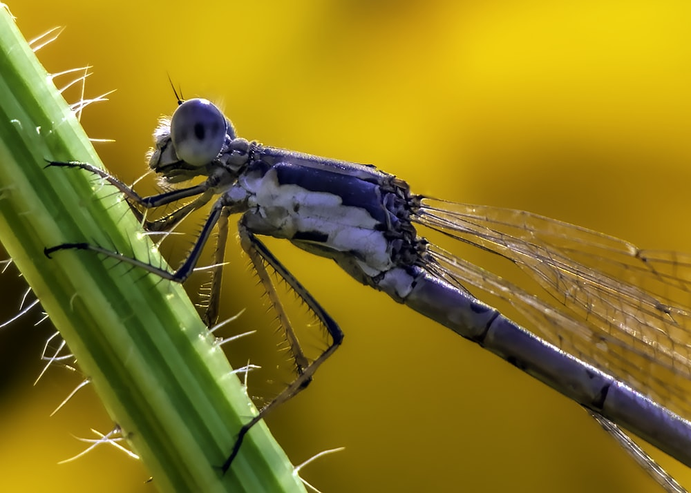 close-up photography of gray dragonfly