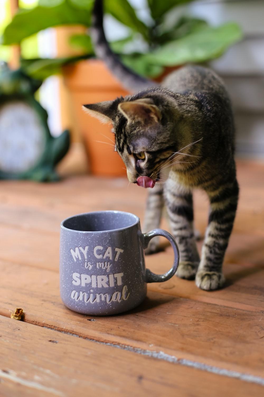 gray tabby cat beside mug