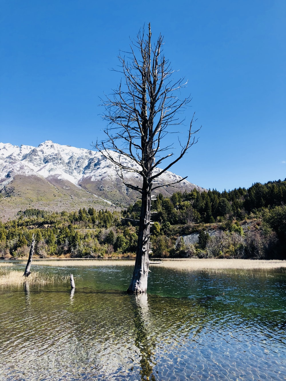 bare tree on body of water viewing mountain under blue and white skies during daytime