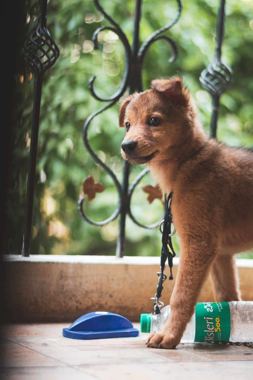 small short-coated tan and black dog near black wrought-iron railings