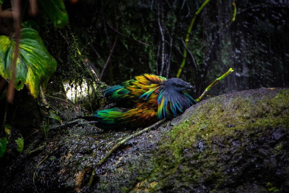 blue, yellow, and green bird