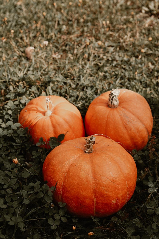 three orange pumpkins on ground
