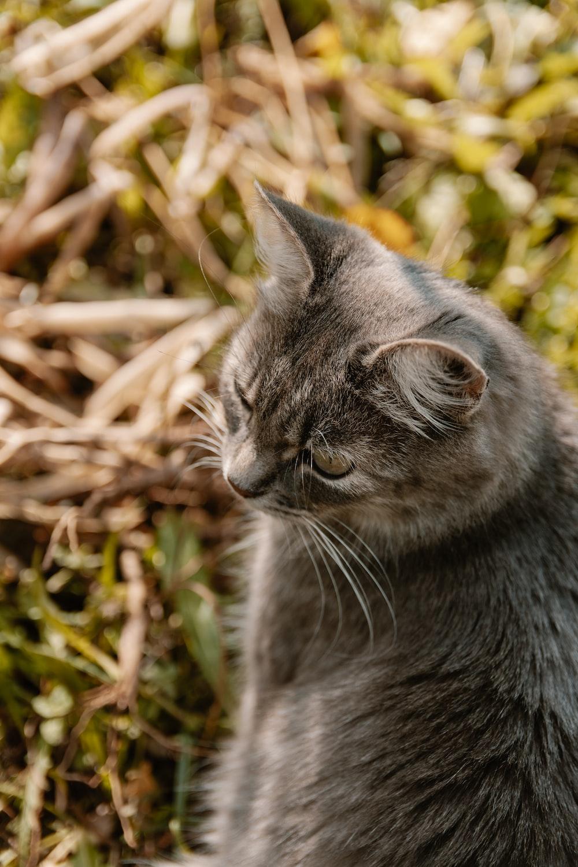 brown tabby cat macro photography