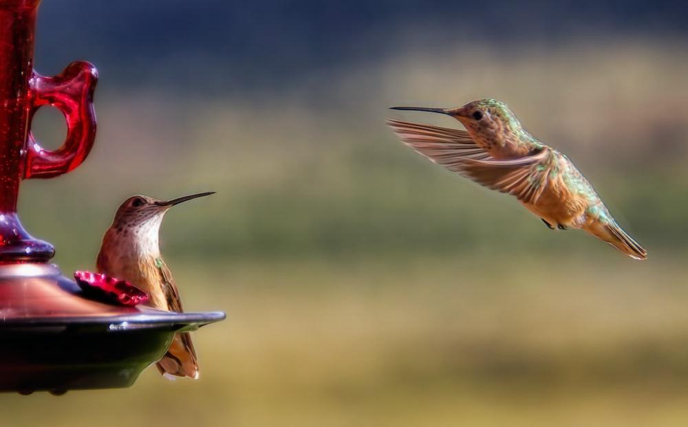 brown hummingbird near bird feeder