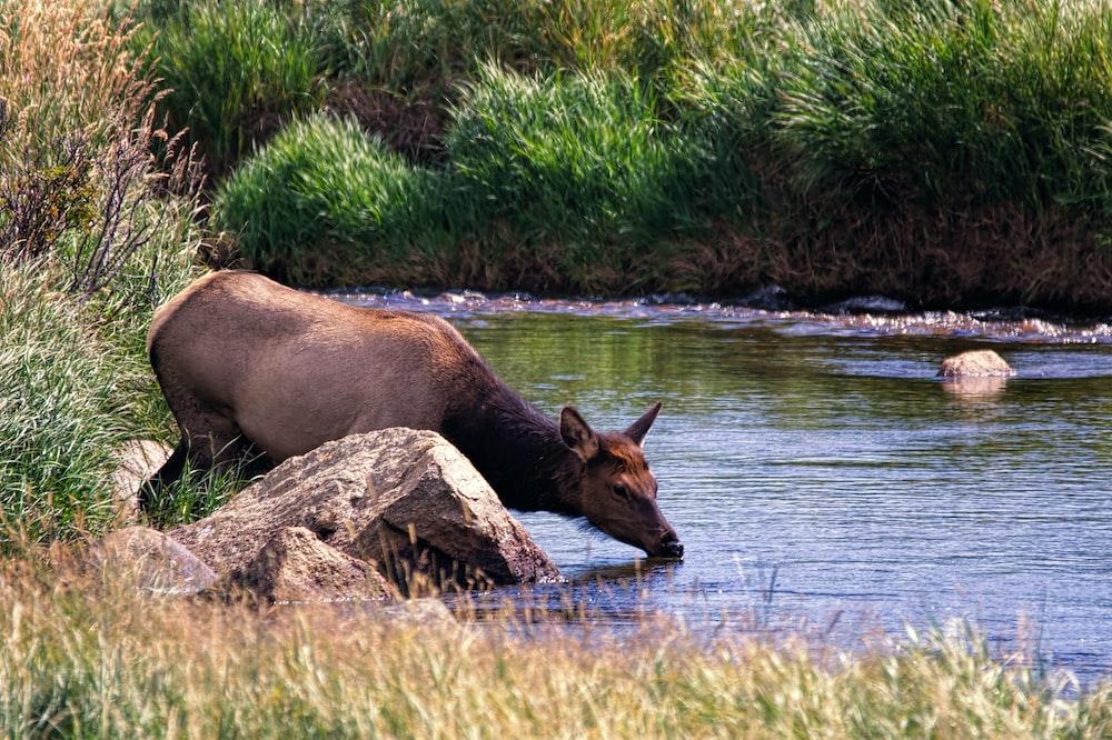 brown animal near river