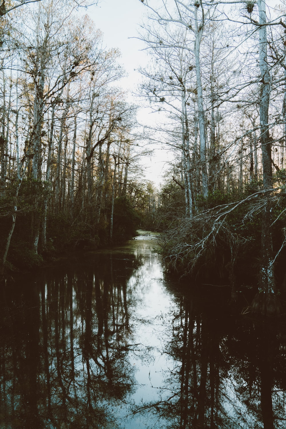 leafless trees between river