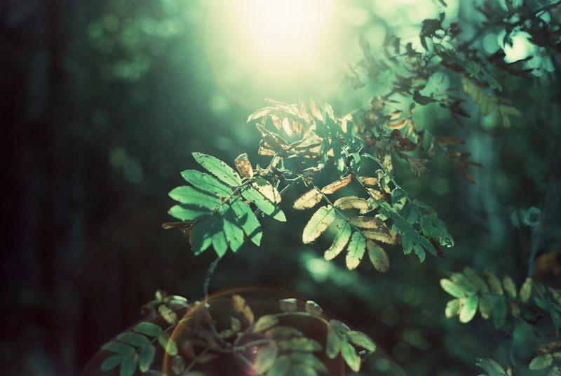 植物に光が当たっている