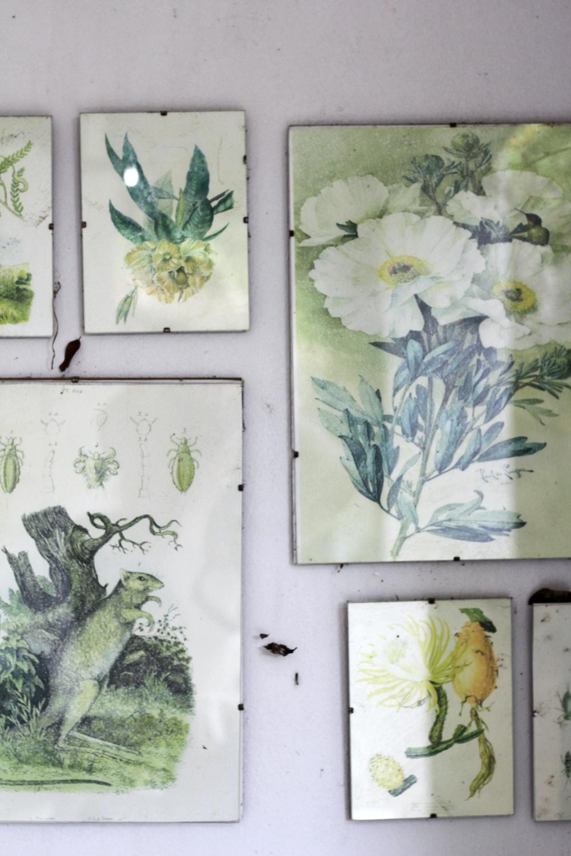 green flower paintings