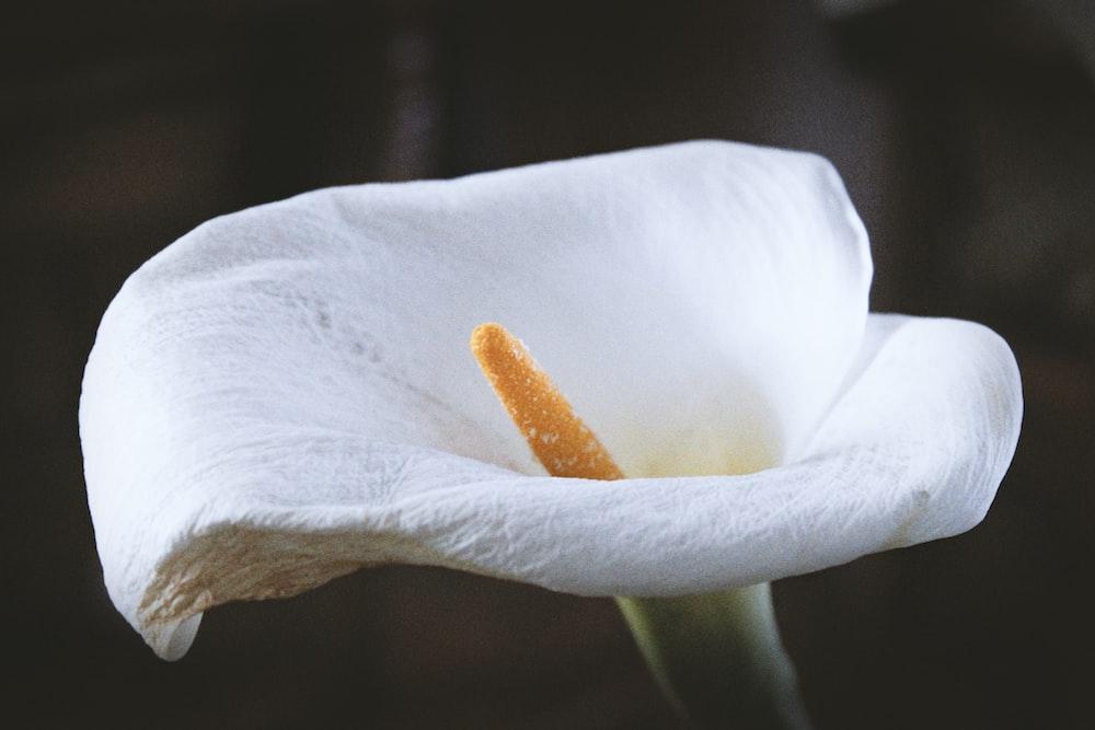 white petal flwer
