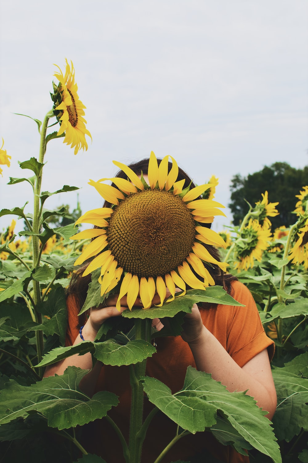 woman covering her face with sunflower