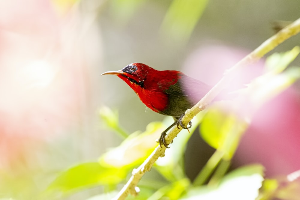 red bird perched on branch