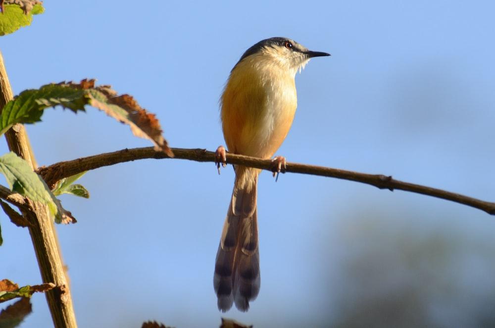 selective focus photo of hummingbird preaching on tree branch