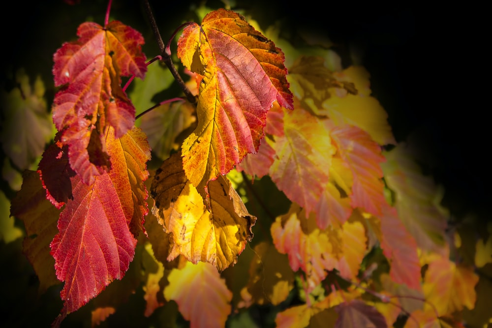brown and red leafed plant