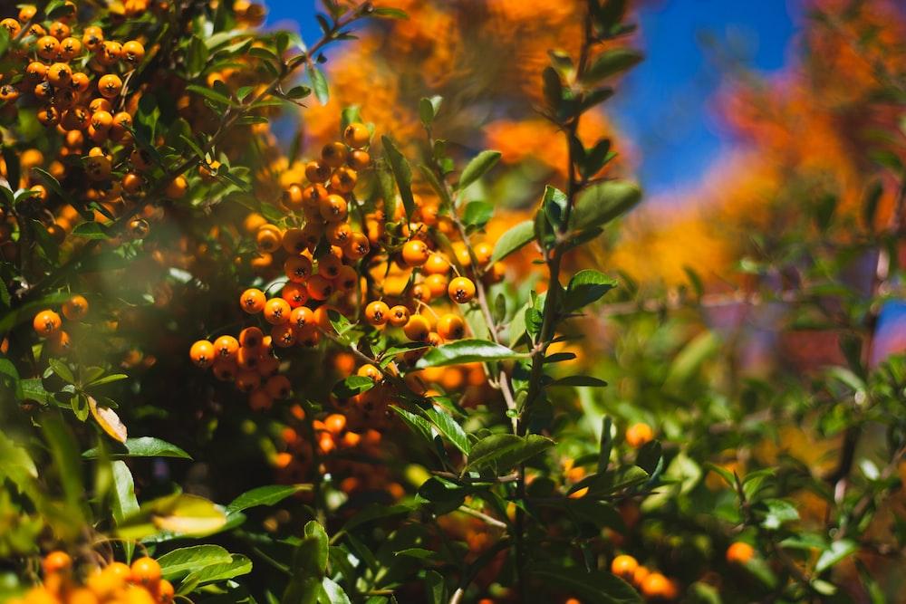 selective focus photo of wild berries