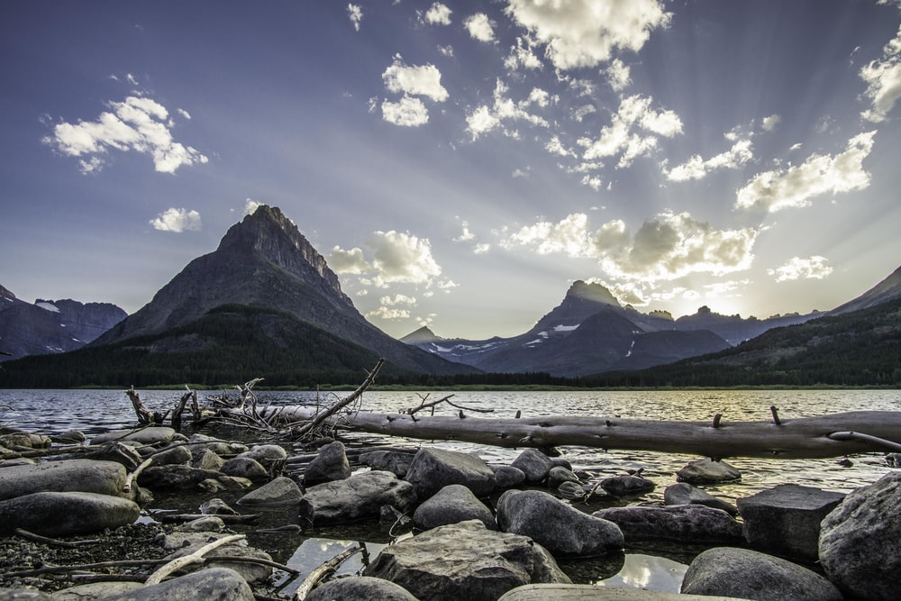 drift wood on rocks beside water at daytime