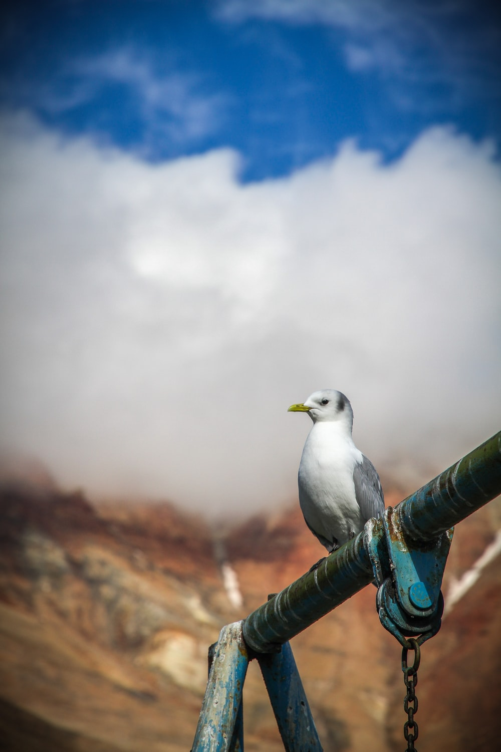 bird perched on metal pole