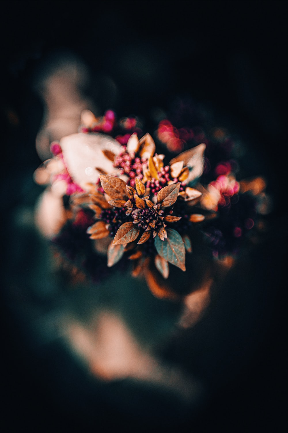 brown and red petaled flowers in selective-focus photo