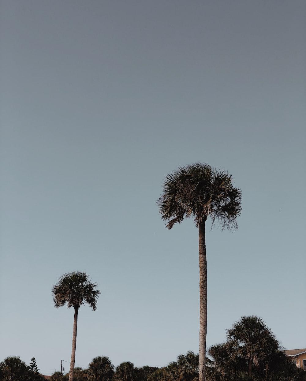 green pal trees photo