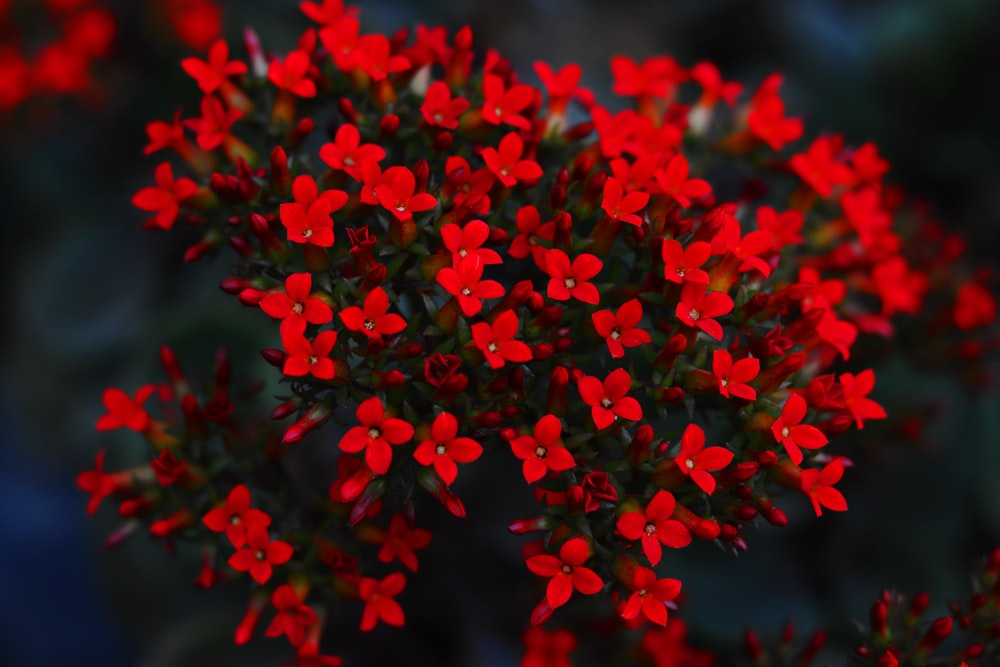 selective focus photography of blooming red flower