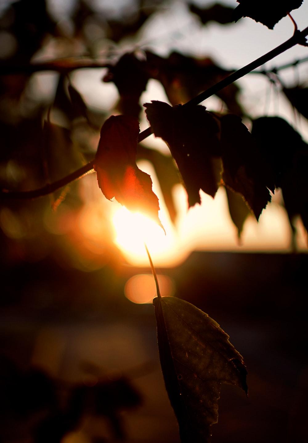 brown leafed plants