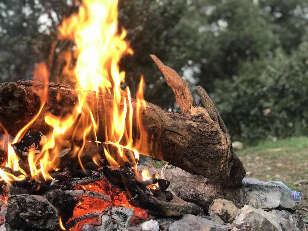 bonfire on grass