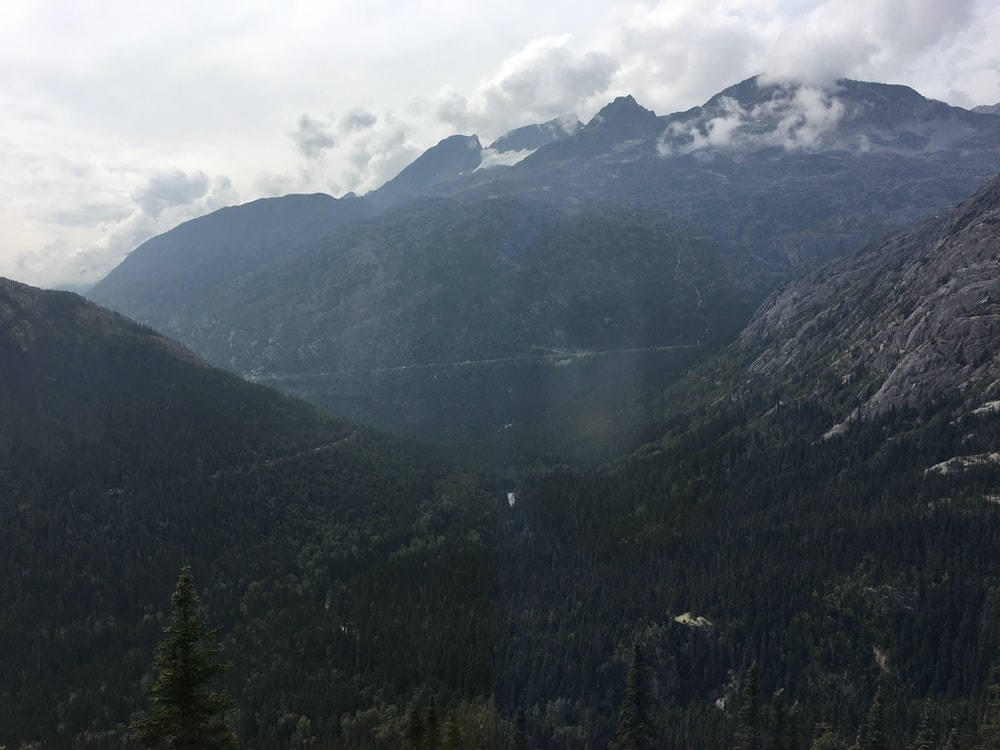 tall trees on mountain