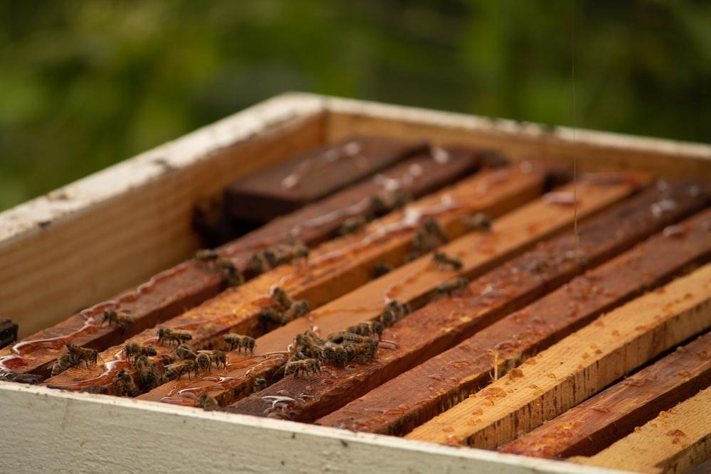 honey bees during daytime