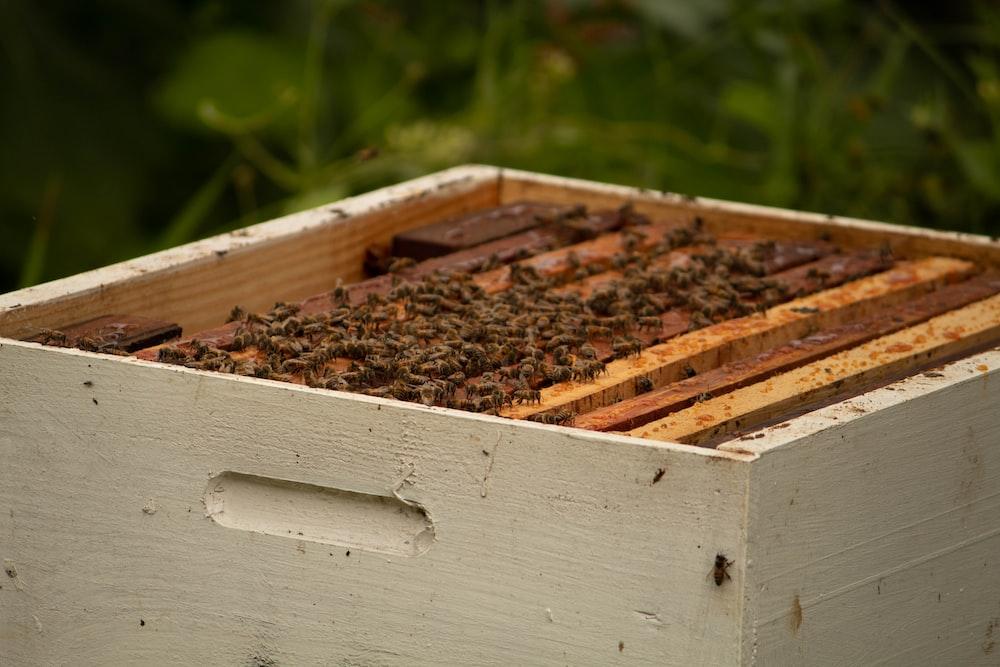 brown wooden beehive
