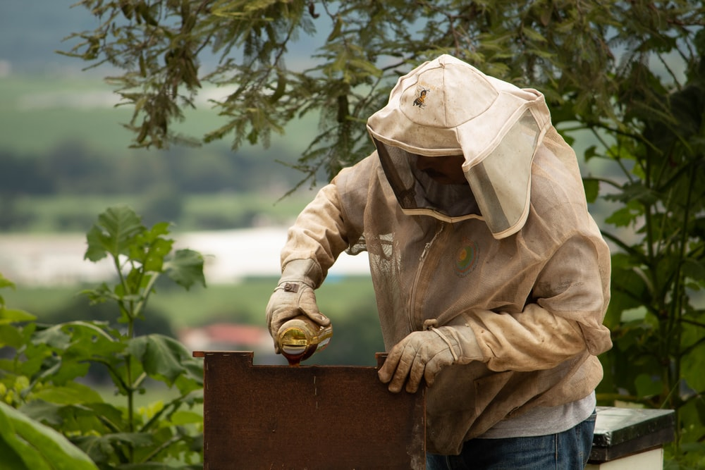 person holding bee hive
